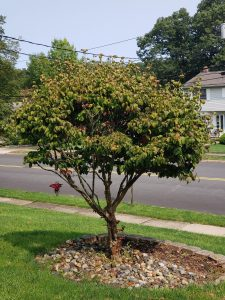 tree trimmingservice